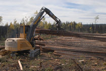 knuckleboom log loader 42 640 kg (94 000 lb), 224 kW (300 hp) | 880 Tigercat