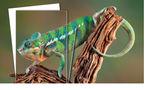 Display panel / flat / foam / PVC PALIGHT® Print Palram Industries Ltd.