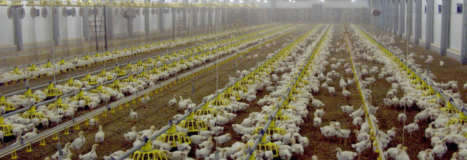 Cherkizovo Poultry Complex
