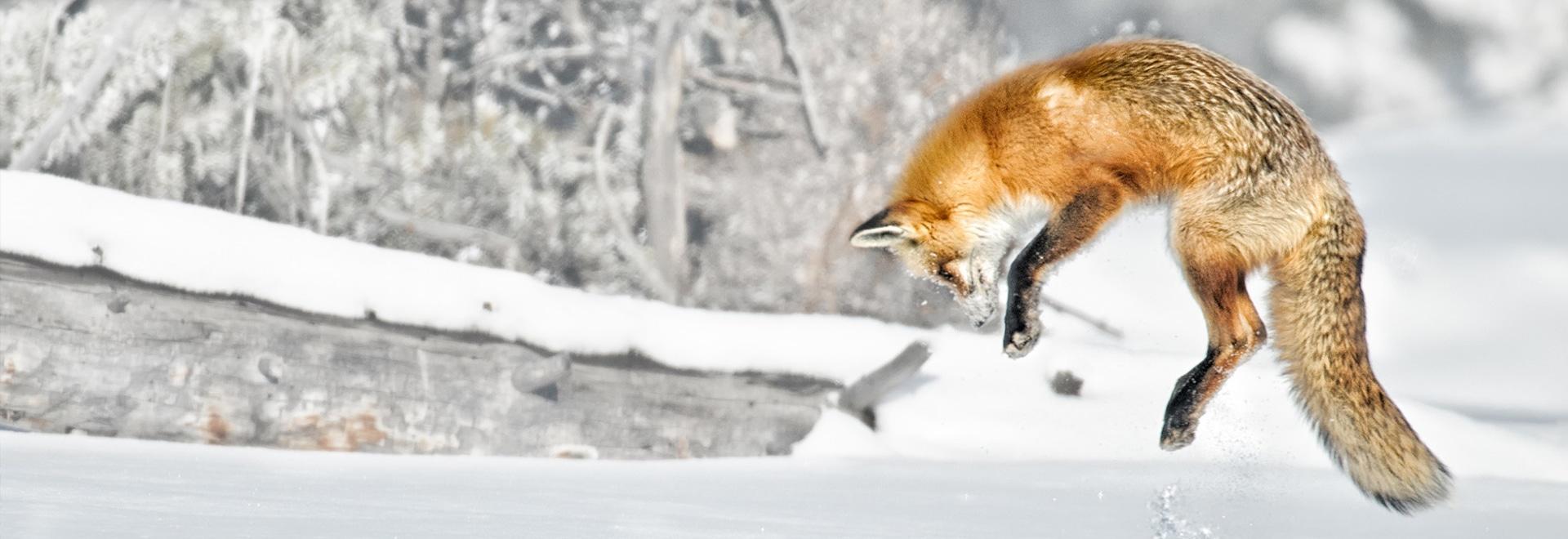 Essemtec Fox