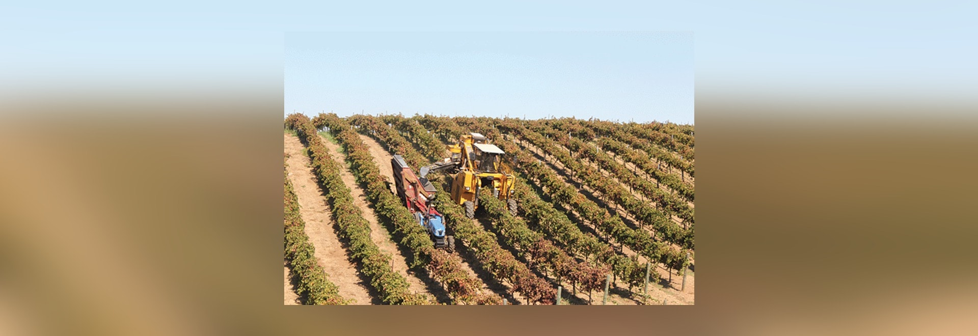 Oxbo's 6000 line of grape and olive harvesters relies on a Danfoss Plus+1 control system to control speed, torque, and power to drive wheels for maximum traction control, precise regulation of spee...