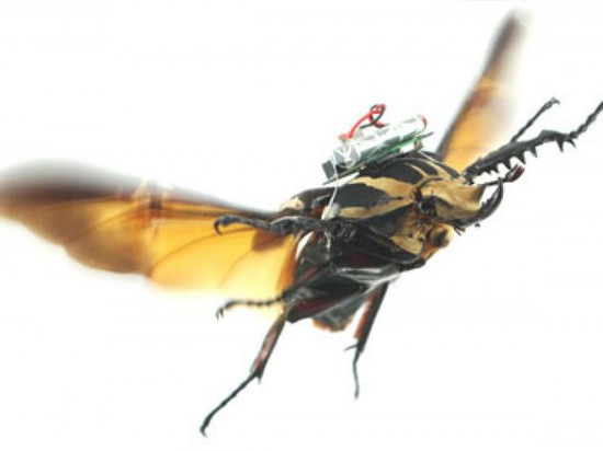 CYBUGS: PRECISION FLYING WITH CYBORG BEETLES