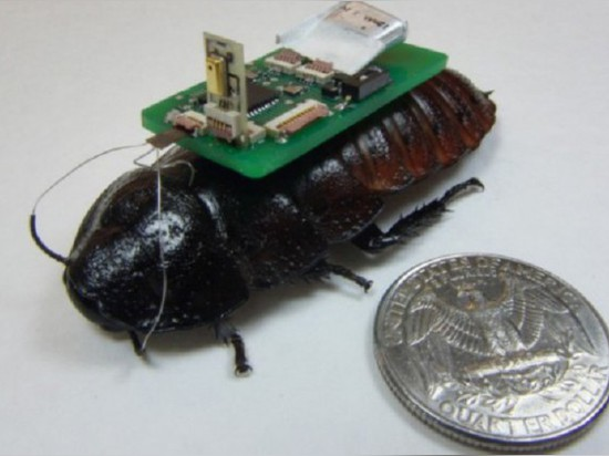 COCKROACHES COULD HELP SAVE TRAPPED DISASTER VICTIMS
