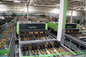 cross-belt sorting machine / automatic / for fruit / for the food industry