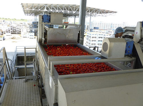 sorting conveyor / belt / roller / for the food industry