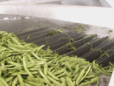 green bean separator