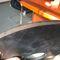 metal cutting machine / fiber laser / sheet metal / CNC