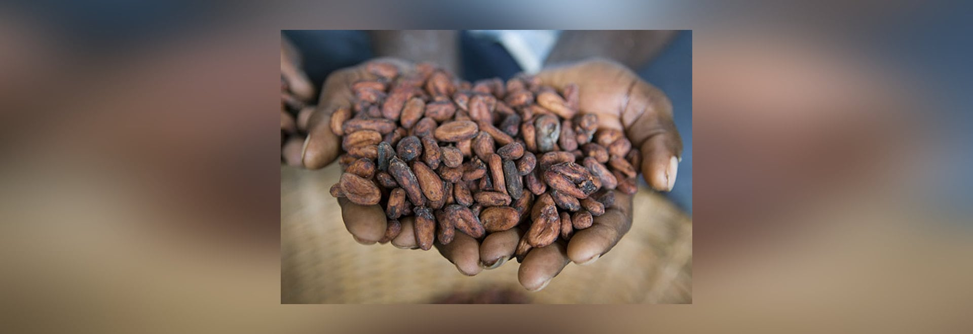 The facility has the capacity to process about 70,000t of cocoa beans per year.