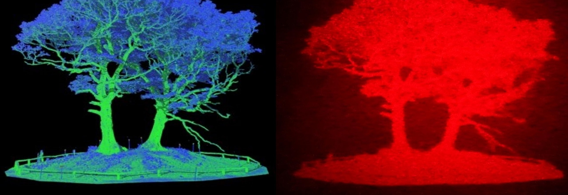 Left: an image of a tree based on LiDAR data. Right: the same image converted to a hologram.