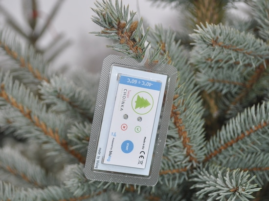 Blulog assures the freshness of Christmas trees in Poland