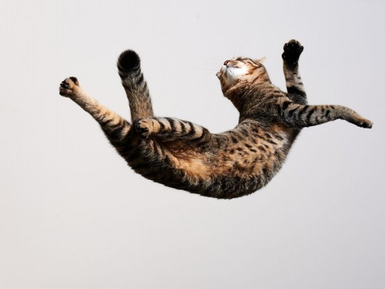 STUDYING CATS' ABILITY TO LAND ON FEET COULD IMPROVE ROBOT DESIGN