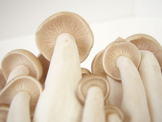 The San Marcos facility produces four varieties of mushrooms.
