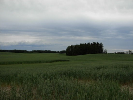 The new facility will be located in Camrose, Alberta, known for its strong agriculture sector.