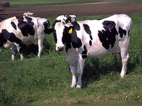 The area is expecting a boom in milk production up to 2013 and extra milk processing capacity will be required.