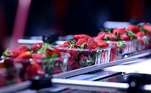 Transformação de frutas e legumes